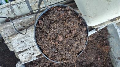 Pot rempli avec le substrat